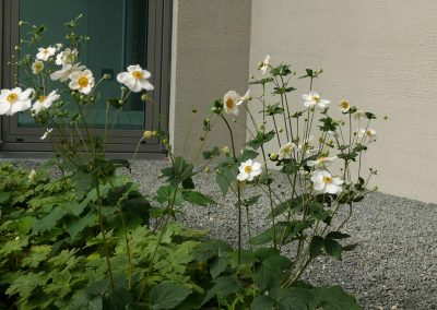 Garten-Landschaftsbau-Kolb-Nuernberg-Johannis-4