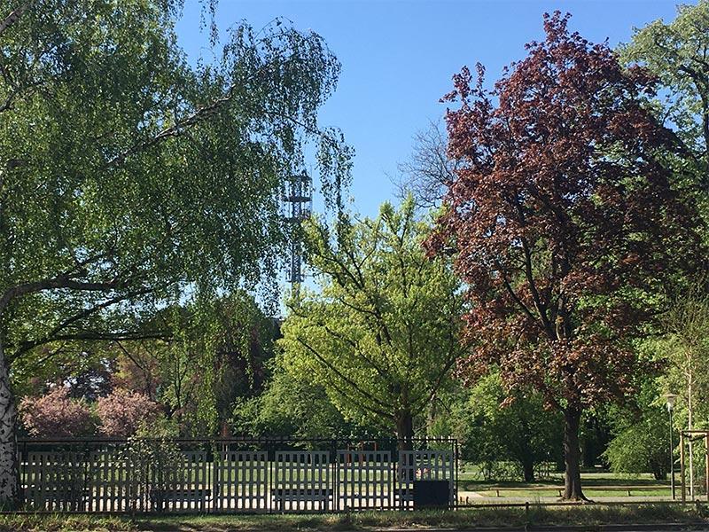 Bäume und Sträucher im Park in Nürnberg