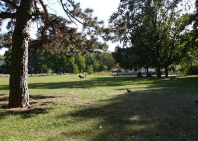 Marie Juchacz Park
